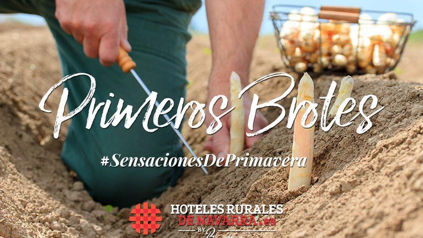 Planes de gastronomía y enoturismo en los hoteles rurales con encanto de españa visita al norte en Navarra viajes gastronómicos y de naturaleza turismo de Navarra